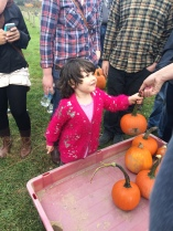 Calli Silbaugh, age 3, hands a pumpkin to a member of Springfield FTK, the THON organization the Silbaugh family is paired with. Springfield spent the day with the family picking pumpkins at a nearby farm.